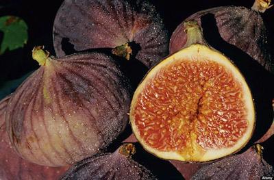 خواص میوه و سبزیجات: مفیدترین میوه پاک کننده معده